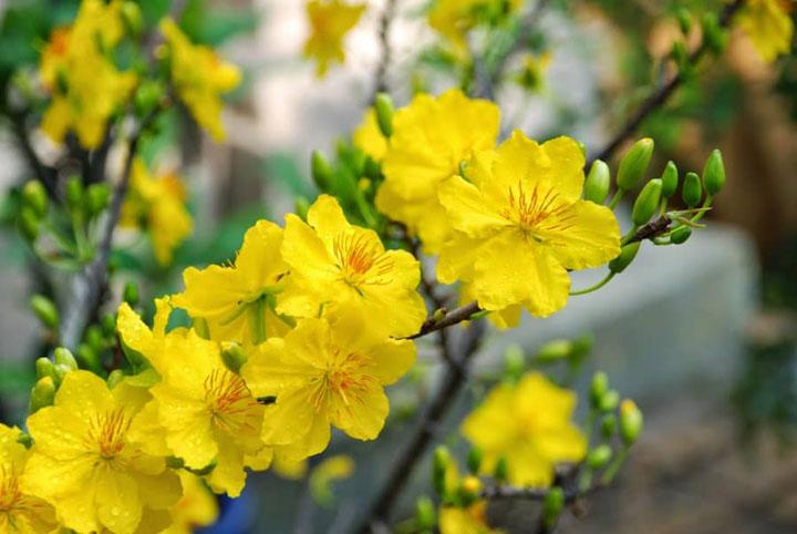 định nghĩa về mùa xuân