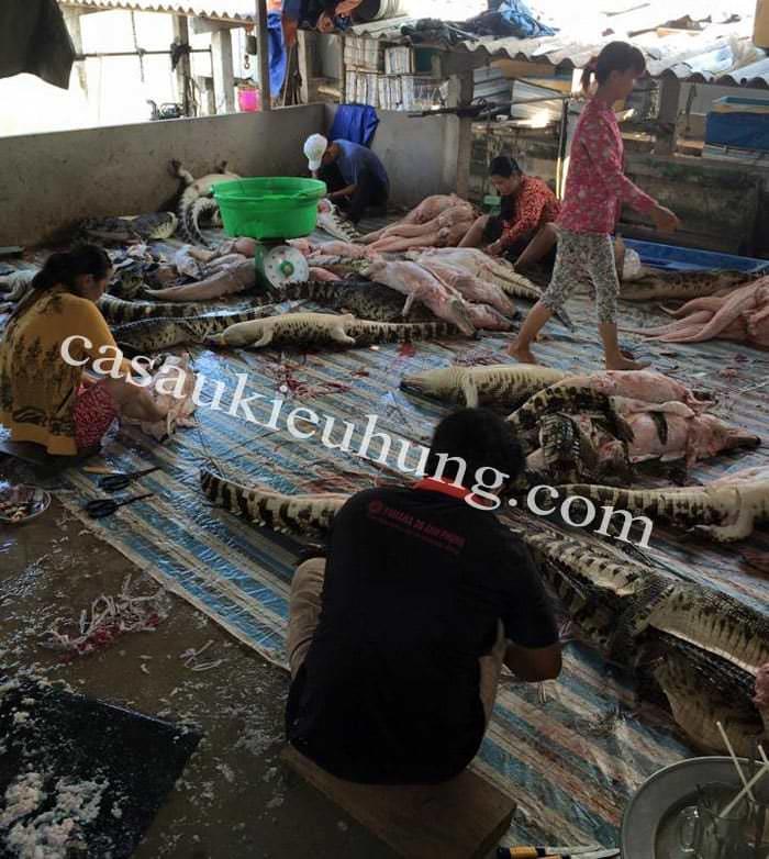 Xưởng giết mổ cá sấu