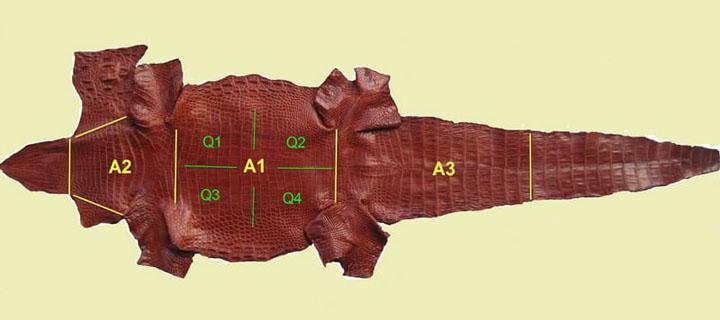 bộ phận da cá sấu