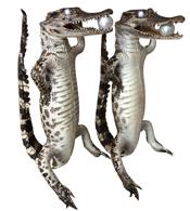 Cá sấu nhồi bông kiểu đứng da tự nhiên hàng phong thuỷ giá rẻ nhất