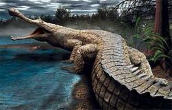 Top 5+ loài cá sấu to nhất lịch sử trên thế giới [ 2019 ]