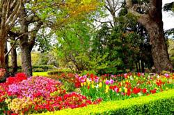Mùa xuân là dịp ý nghĩa nhất để nhà nhà sum họp sau thời gian dài